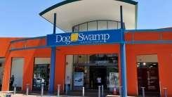 494450-dog-swamp